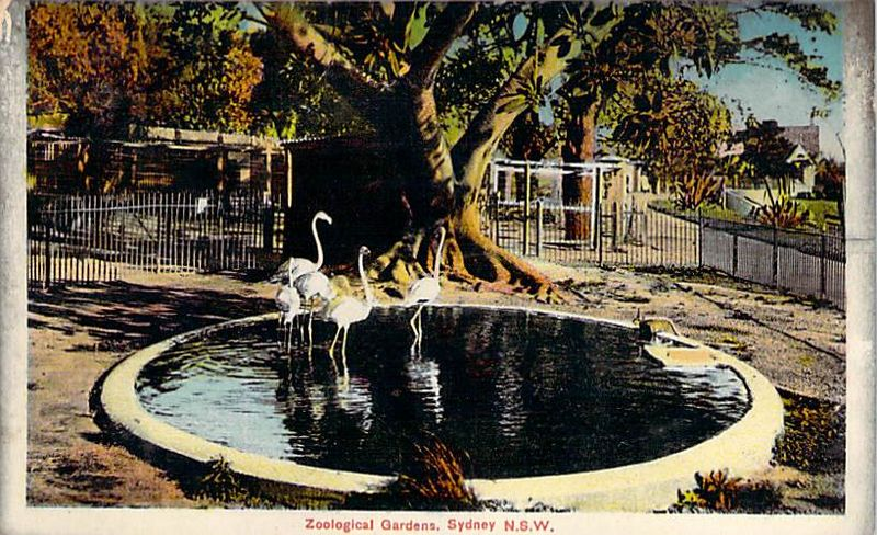 Zoological Gardens Sydney NSW Flamingos Front