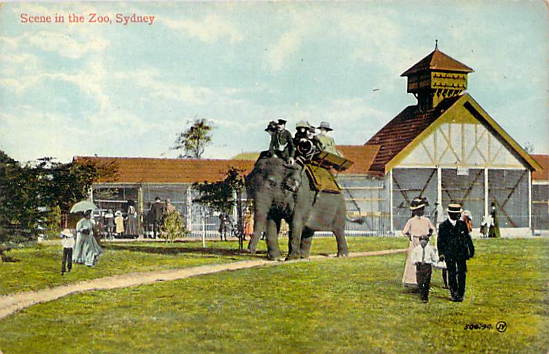 Scene In The Zoo Sydney Elephants Front