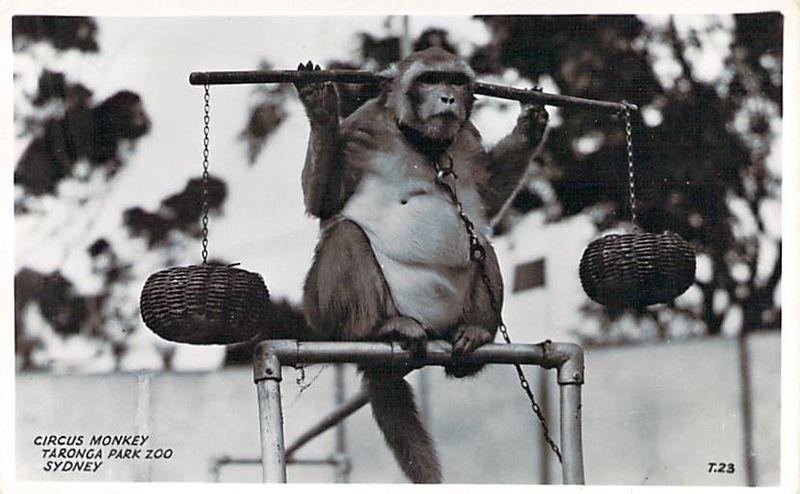 Circus Monkey Taronga Park Zoo Sydney Front